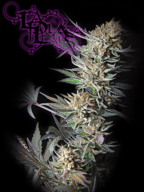 alien blues - la plata labs