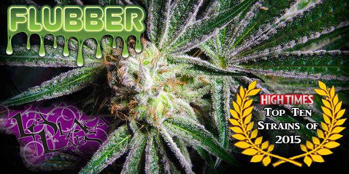 top ten strains of 2015 flubber